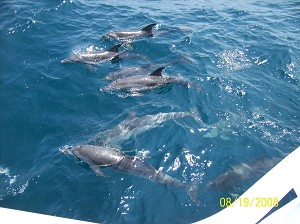 Dolphin Tours Myrtle Beach